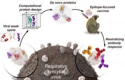 https://ojdanesh.com/1399/9950/طراحی واکسن از پروتئین های مهندسی شده/